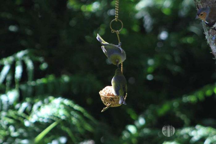 Brass Basket Tree Earring Bird Feeder