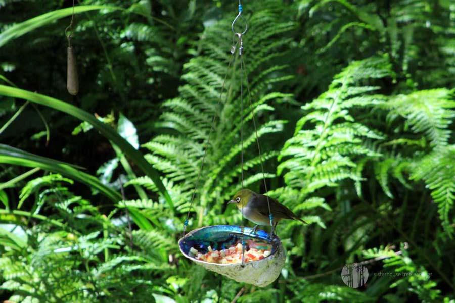 Paua Dish Tree Earring Bird Feeder