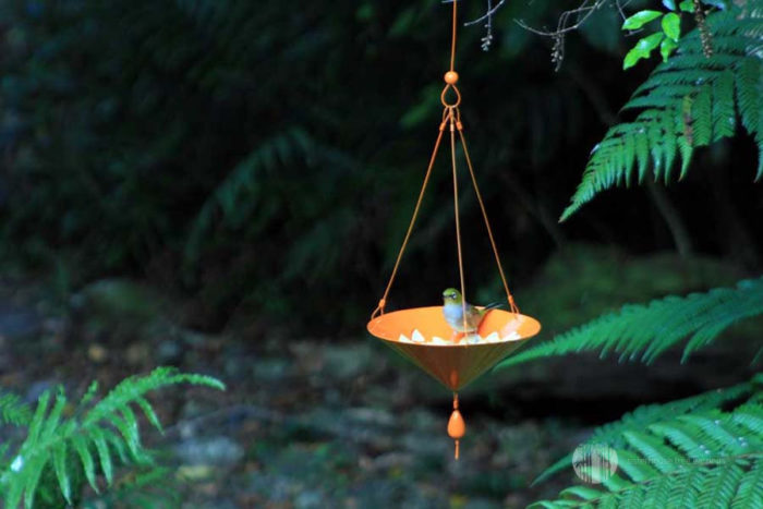 Salver Tree Earring Bird Feeder